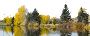 Spring Creek Fort Collins